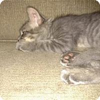 Adopt A Pet :: Ranger - Rocklin, CA