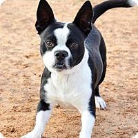 Adopt A Pet :: Jax - Midland, TX