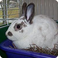 Adopt A Pet :: Val - Alexandria, VA