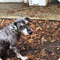 Adopt A Pet :: Beverly - Gainesville, FL