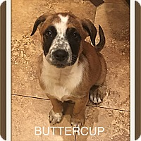 Adopt A Pet :: Buttercup - Tempe, AZ