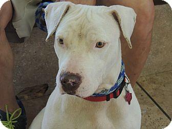 Labrador Retriever Mix Dog for adoption in Houston, Texas - Nena