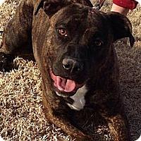 Adopt A Pet :: Kiki - Alamogordo, NM