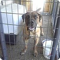 Adopt A Pet :: Barney - Scotland Neck, NC