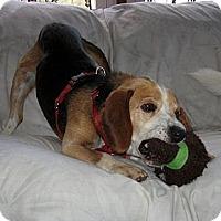 Adopt A Pet :: Dodger - Novi, MI