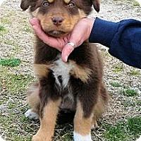 Adopt A Pet :: Rylee - Waller, TX