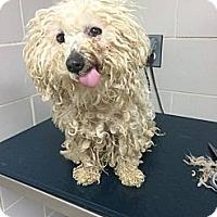Adopt A Pet :: Winnie - Evans, CO