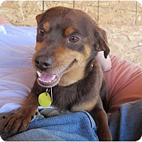 Adopt A Pet :: Gulliver - Chimayo, NM