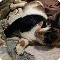 Adopt A Pet :: Pubs - Oviedo, FL