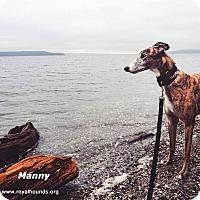 Adopt A Pet :: Manny - Seattle, WA