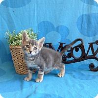 Adopt A Pet :: Hudson - Coral Springs, FL