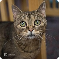 Adopt A Pet :: Lilith - St. Paul, MN