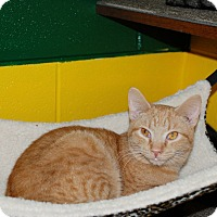 Adopt A Pet :: Butterscotch - Salem, WV