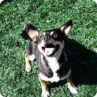 Adopt A Pet :: Glenn - Chula Vista, CA