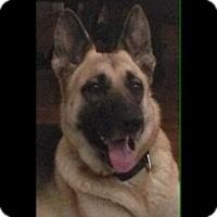 Adopt A Pet :: Jubilee - Houston, TX