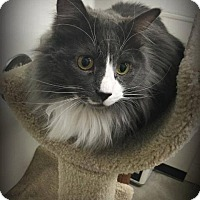 Adopt A Pet :: Mr Pixie - St. Louis, MO