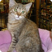Adopt A Pet :: Cloud and Starshine - Dallas, TX