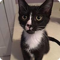 Adopt A Pet :: Betty Boop - Columbia, SC