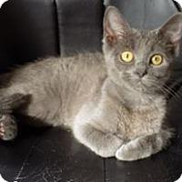 Adopt A Pet :: Keeko - Naperville, IL