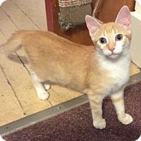 Adopt A Pet :: Peach - Mt Pleasant, PA