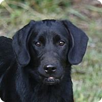 Adopt A Pet :: Mowgli - Good Hope, GA