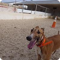 Adopt A Pet :: Leslie - Aurora, OH