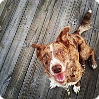 Adopt A Pet :: Skipper - Minneapolis, MN