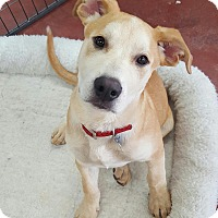 Shepherd (Unknown Type) Mix Puppy for adoption in Tehachapi, California - Ozzie