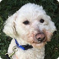 Adopt A Pet :: Archie - Santa Cruz, CA