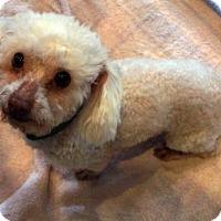 Adopt A Pet :: Max - Waco, TX