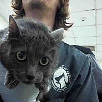 Adopt A Pet :: ELLIE - Conroe, TX