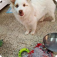 Adopt A Pet :: Duff - Thousand Oaks, CA