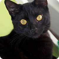 Adopt A Pet :: Laird - Los Angeles, CA