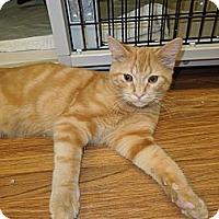 Adopt A Pet :: Peanut Butter - Medina, OH