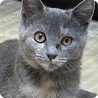 Adopt A Pet :: Bluebelle - Bedford, MA