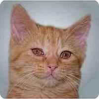 Adopt A Pet :: Ellie - Montgomery, IL