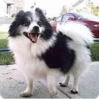 Adopt A Pet :: Gem - Grove City, OH