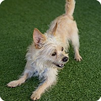 Adopt A Pet :: Rory - Mission Viejo, CA