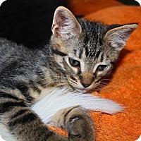 Adopt A Pet :: Pippin - Phoenix, AZ