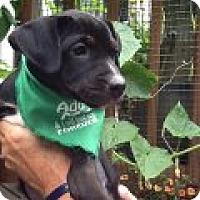 Adopt A Pet :: Tennille - Richmond, VA