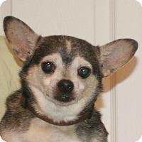Adopt A Pet :: Kobe - Umatilla, FL