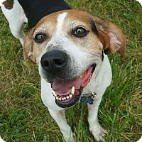 Adopt A Pet :: Sera - Upper Sandusky, OH