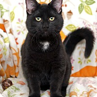 Adopt A Pet :: Desmond - St Louis, MO