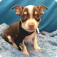 Adopt A Pet :: Simon - Irvine, CA