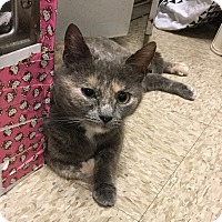 Adopt A Pet :: Heather - Colmar, PA