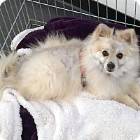 Adopt A Pet :: Lenny - Irvine, CA