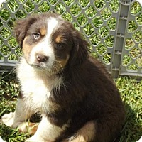 Adopt A Pet :: RIVER - currently in a foster home - Roanoke, VA