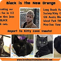 Adopt A Pet :: black kitties fees are 1/2 off - Island Park, NY