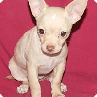 Adopt A Pet :: Cheese: Mozzarella - Palo Alto, CA