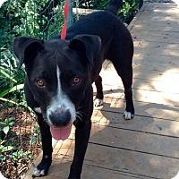 Adopt A Pet :: Maggie - Santa Ana, CA